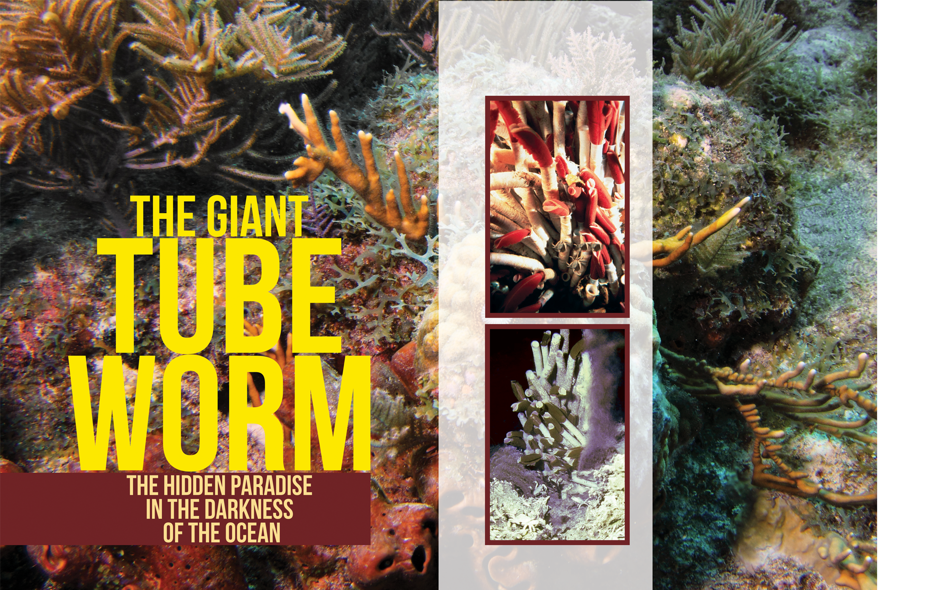 The Giant Tube Worm: The Hidden Paradise in the Darkness of the Ocean