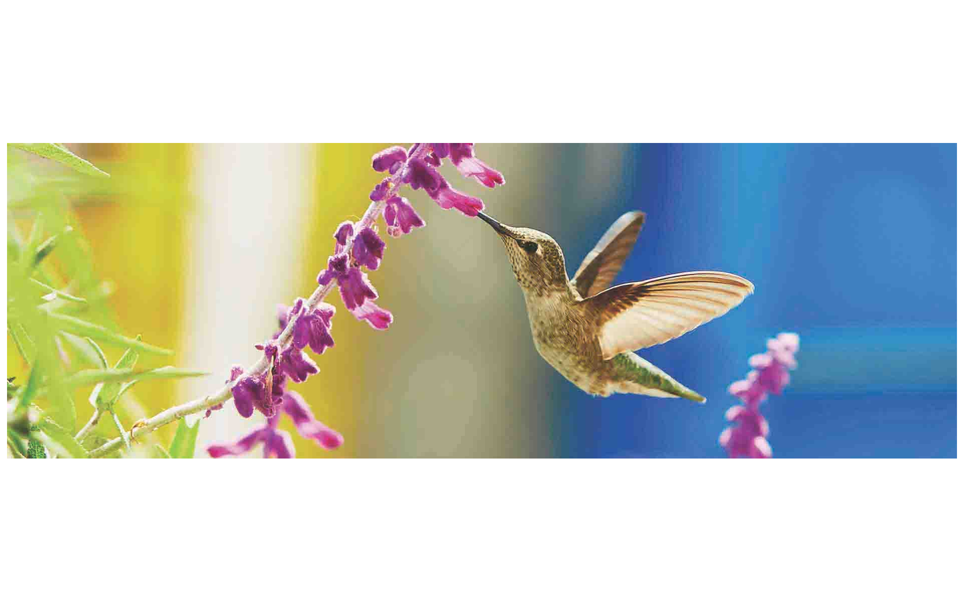 The Hummingbird: Small in Size, Great in Art
